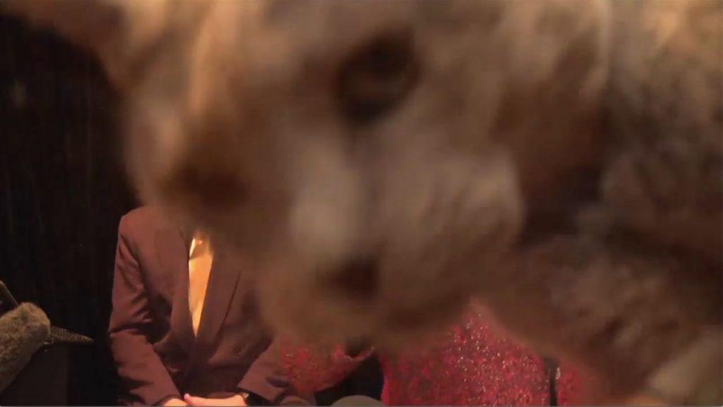 Maynard's Mastermind Quiz giant cat in camera lens